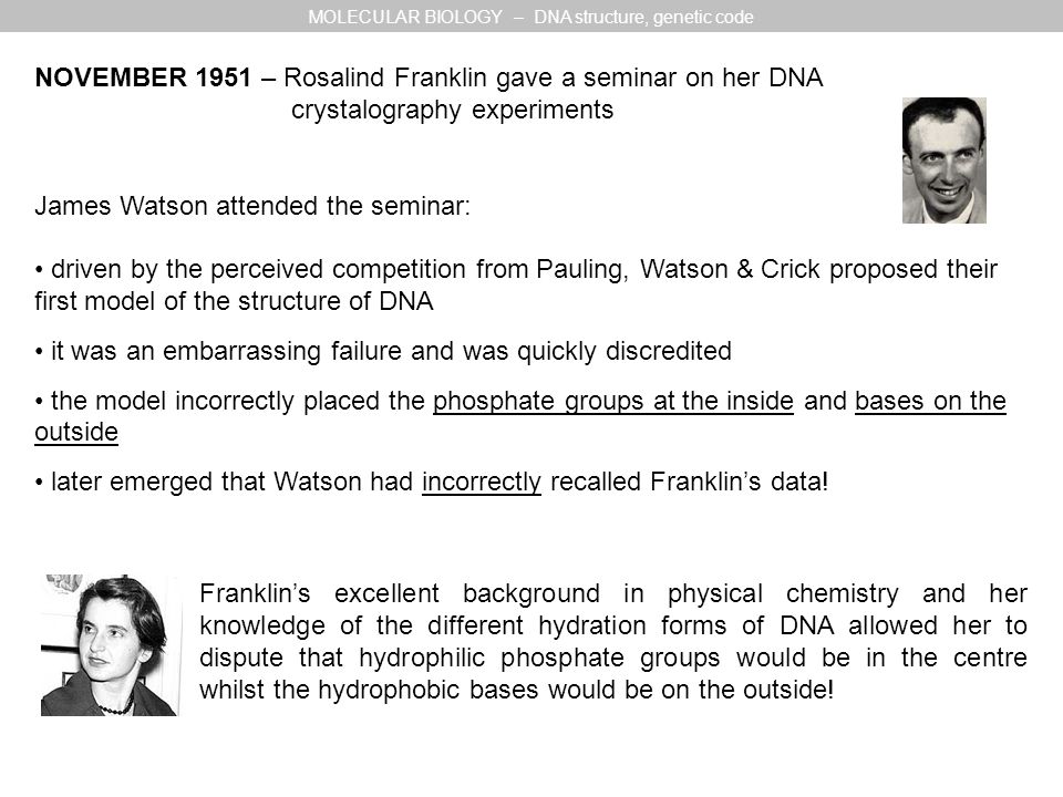 NOVEMBER 1951 – Rosalind Franklin gave a seminar on her DNA crystalography experiments James Watson attended the seminar: driven by the perceived competition from Pauling, Watson & Crick proposed their first model of the structure of DNA it was an embarrassing failure and was quickly discredited the model incorrectly placed the phosphate groups at the inside and bases on the outside later emerged that Watson had incorrectly recalled Franklin's data.