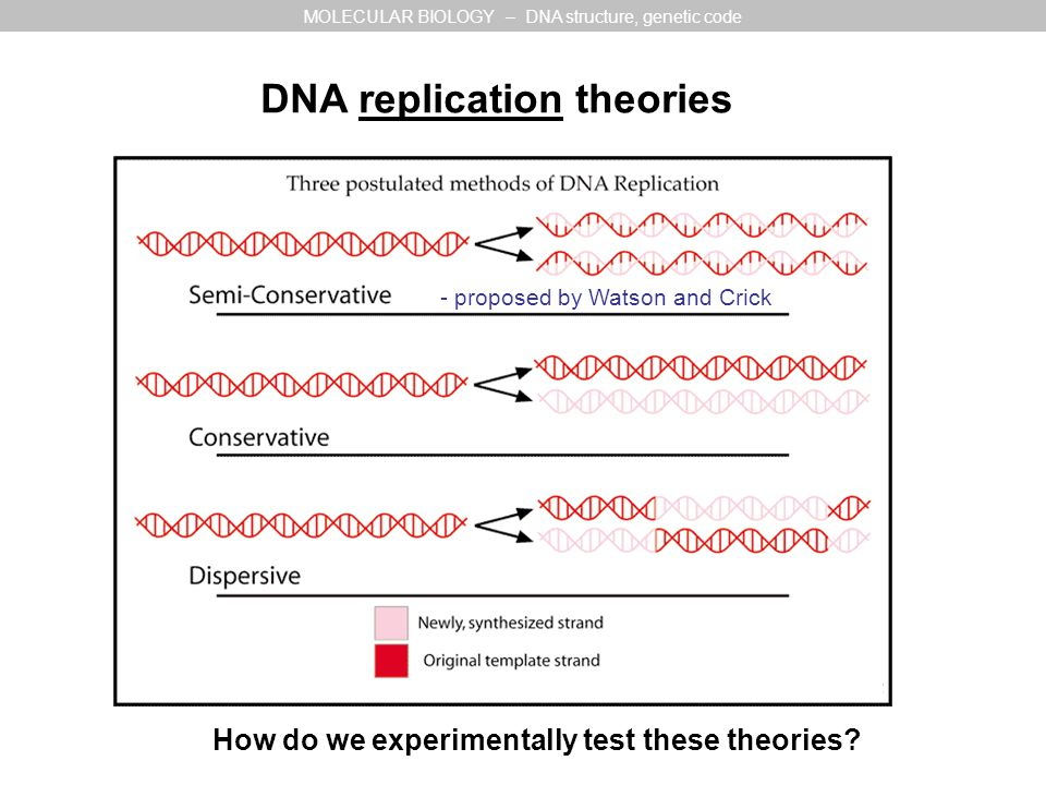 DNA replication theories MOLECULAR BIOLOGY – DNA structure, genetic code How do we experimentally test these theories.
