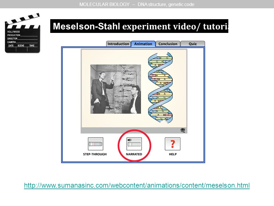 MOLECULAR BIOLOGY – DNA structure, genetic code http://www.sumanasinc.com/webcontent/animations/content/meselson.html Meselson-Stahl experiment video/ tutorial