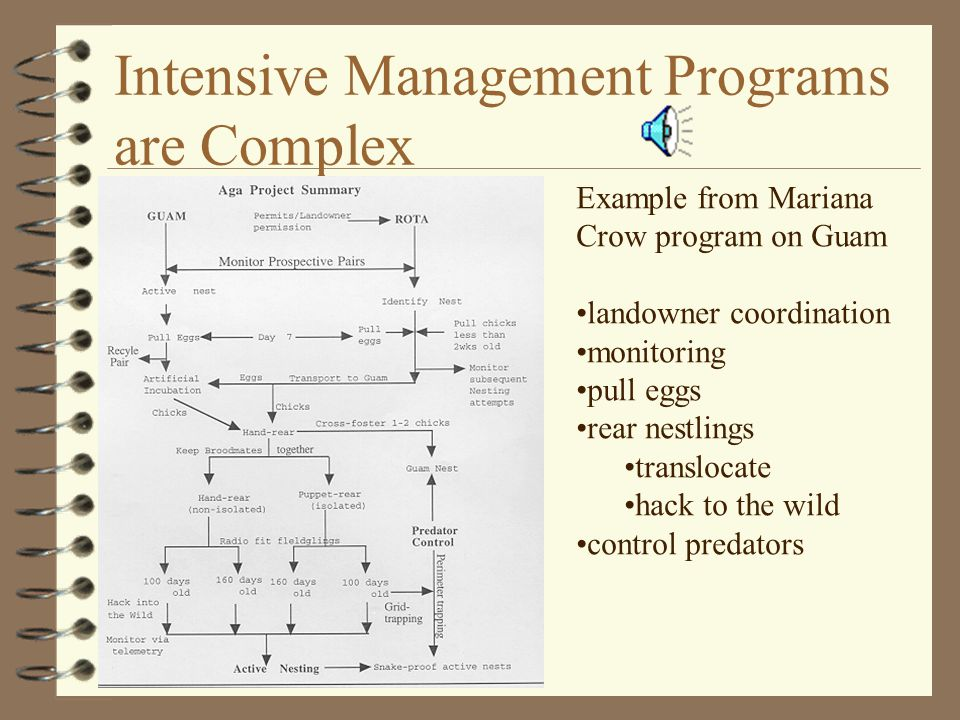 Intensive Management Programs are Complex Example from Mariana Crow program on Guam landowner coordination monitoring pull eggs rear nestlings translocate hack to the wild control predators