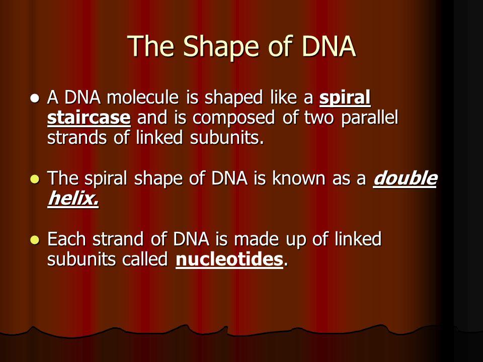 The Shape of DNA A DNA molecule is shaped like a spiral staircase and is composed of two parallel strands of linked subunits. A DNA molecule is shaped