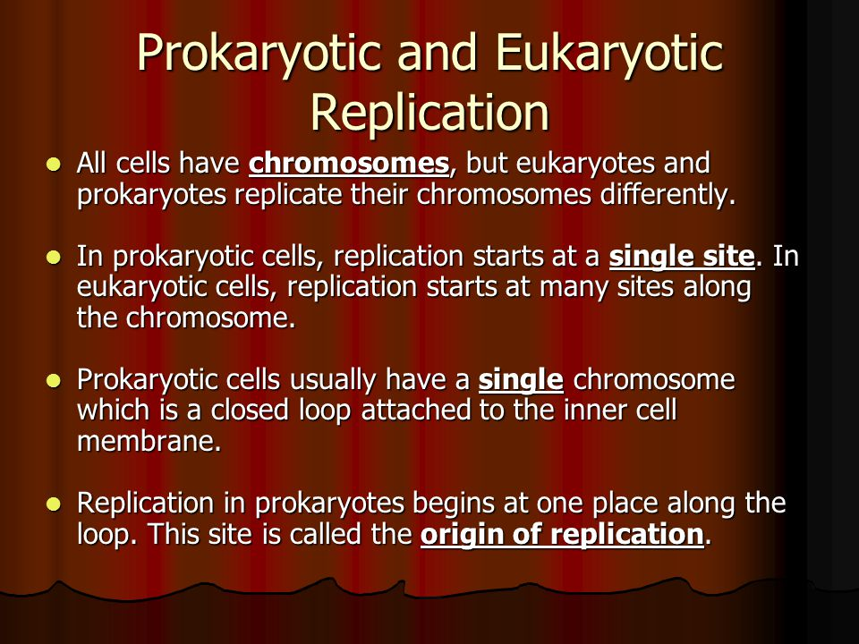Prokaryotic and Eukaryotic Replication All cells have chromosomes, but eukaryotes and prokaryotes replicate their chromosomes differently.