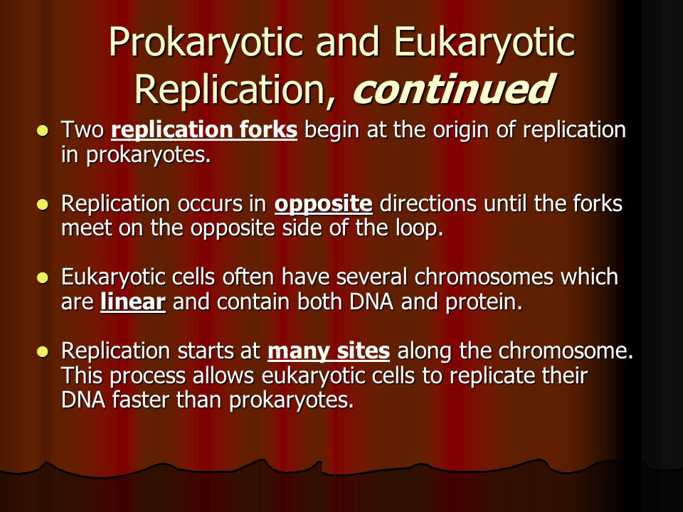 Prokaryotic and Eukaryotic Replication, continued Two begin at the origin of replication in prokaryotes. Two replication forks begin at the origin of