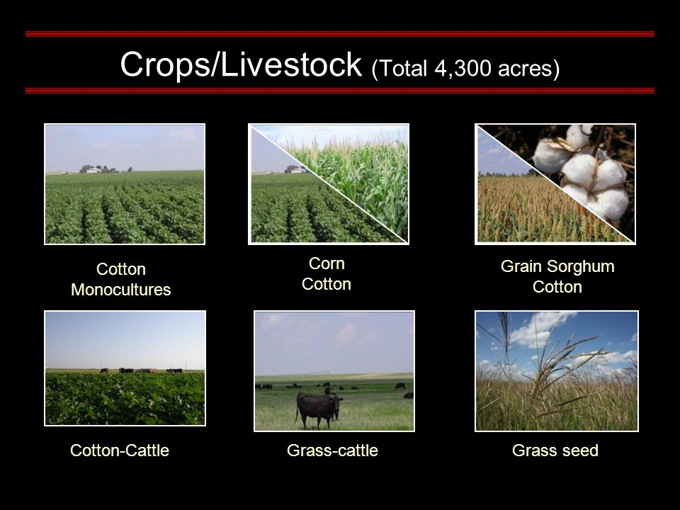 Crops/Livestock (Total 4,300 acres) Corn Cotton Monocultures Grain Sorghum Cotton Cotton-CattleGrass-cattleGrass seed