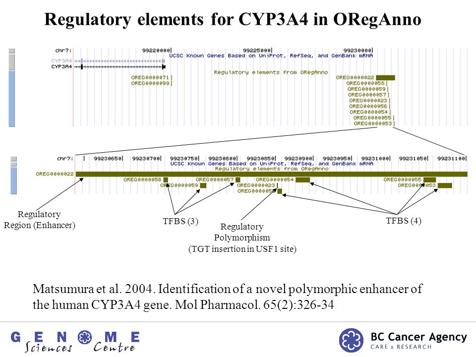 Regulatory elements for CYP3A4 in ORegAnno Matsumura et al.