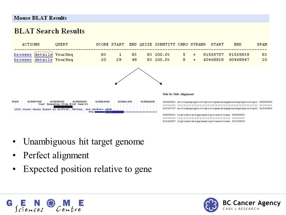 Unambiguous hit target genome Perfect alignment Expected position relative to gene