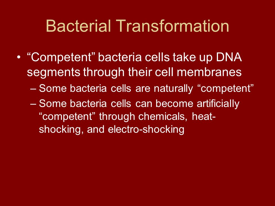 """Bacterial Transformation """"Competent"""" bacteria cells take up DNA segments through their cell membranes –Some bacteria cells are naturally """"competent"""" –"""