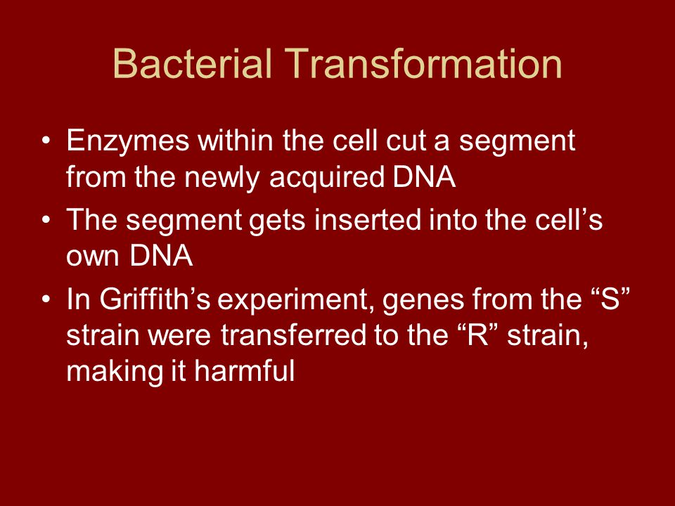 Bacterial Transformation Enzymes within the cell cut a segment from the newly acquired DNA The segment gets inserted into the cell's own DNA In Griffi