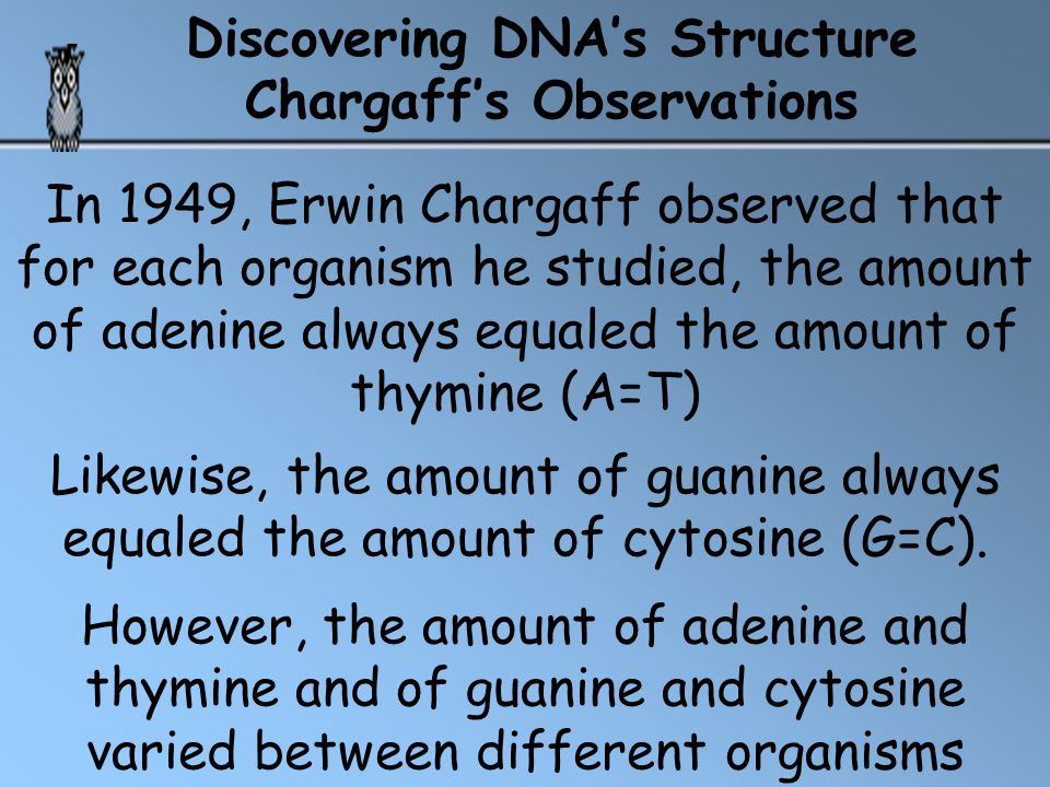 The nitrogen base in a nucleotide can be either a bulky, double-ring purine, or a smaller, single-ring pyrimidine.