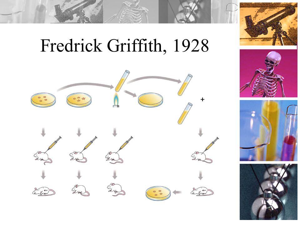 Fredrick Griffith, 1928