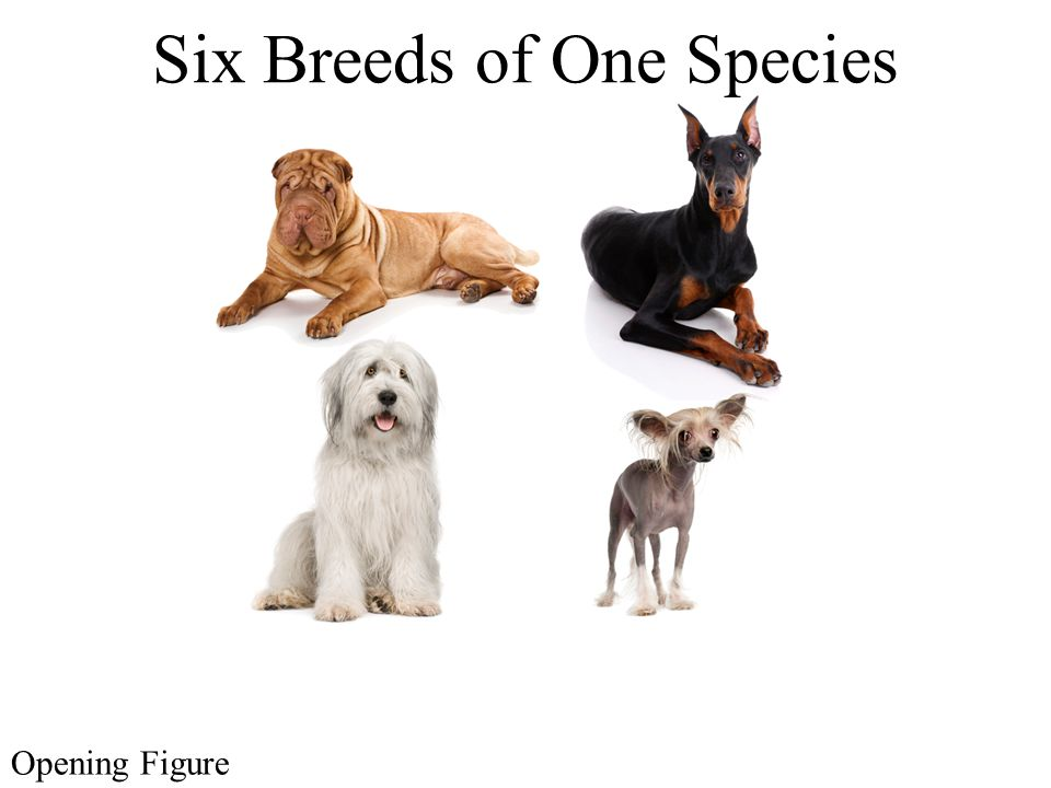 Six Breeds of One Species Opening Figure