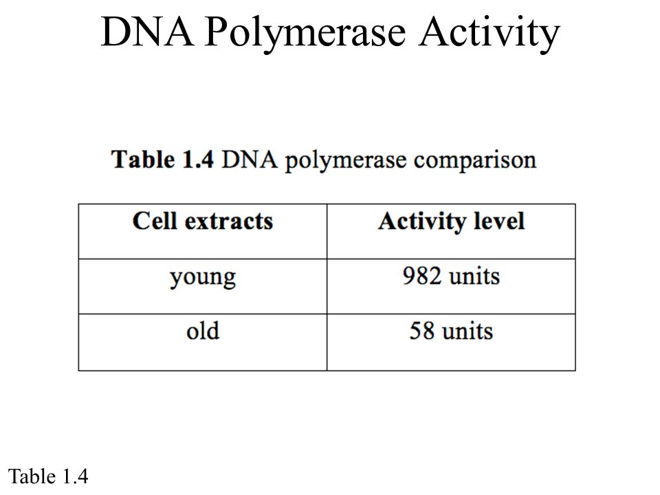 DNA Polymerase Activity Table 1.4