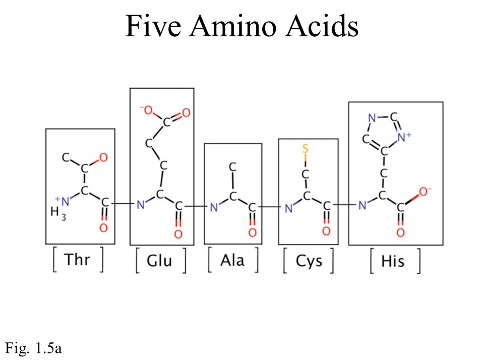 Five Amino Acids Fig. 1.5a