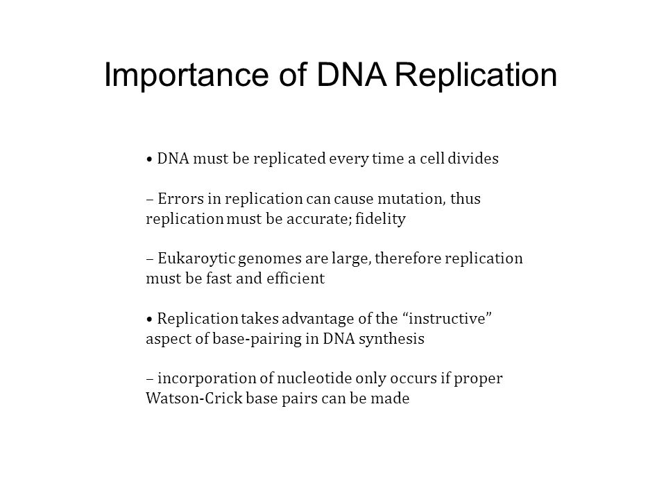 Importance of DNA Replication DNA must be replicated every time a cell divides – Errors in replication can cause mutation, thus replication must be ac