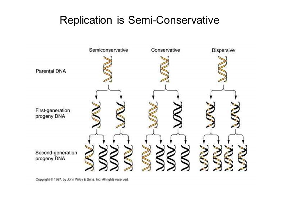 Replication is Semi-Conservative