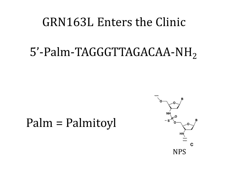 GRN163L Enters the Clinic NPS 5'-Palm-TAGGGTTAGACAA-NH 2 Palm = Palmitoyl