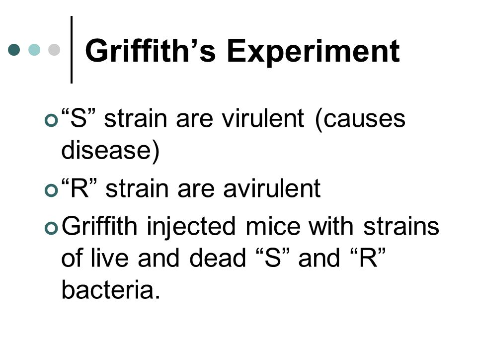 Griffith's Experiment S strain are virulent (causes disease) R strain are avirulent Griffith injected mice with strains of live and dead S and R bacteria.