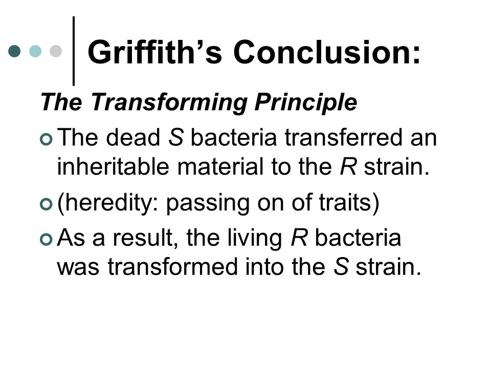 Griffith's Conclusion: The Transforming Principle The dead S bacteria transferred an inheritable material to the R strain.