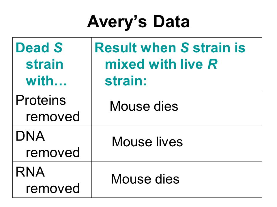 Avery's Data Dead S strain with… Result when S strain is mixed with live R strain: Proteins removed DNA removed RNA removed Mouse dies Mouse lives