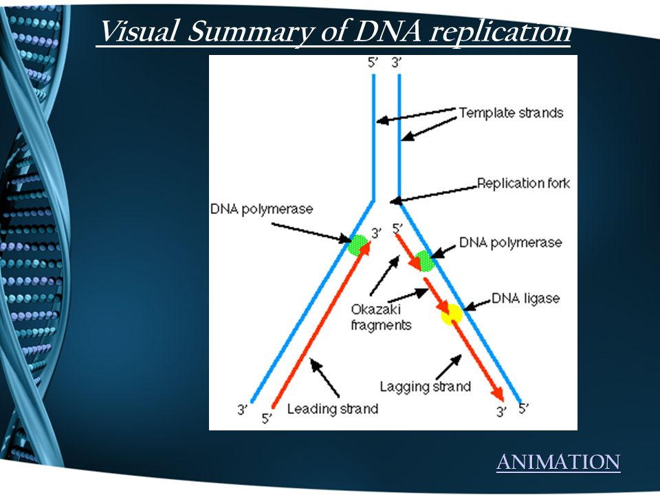 Visual Summary of DNA replication ANIMATION