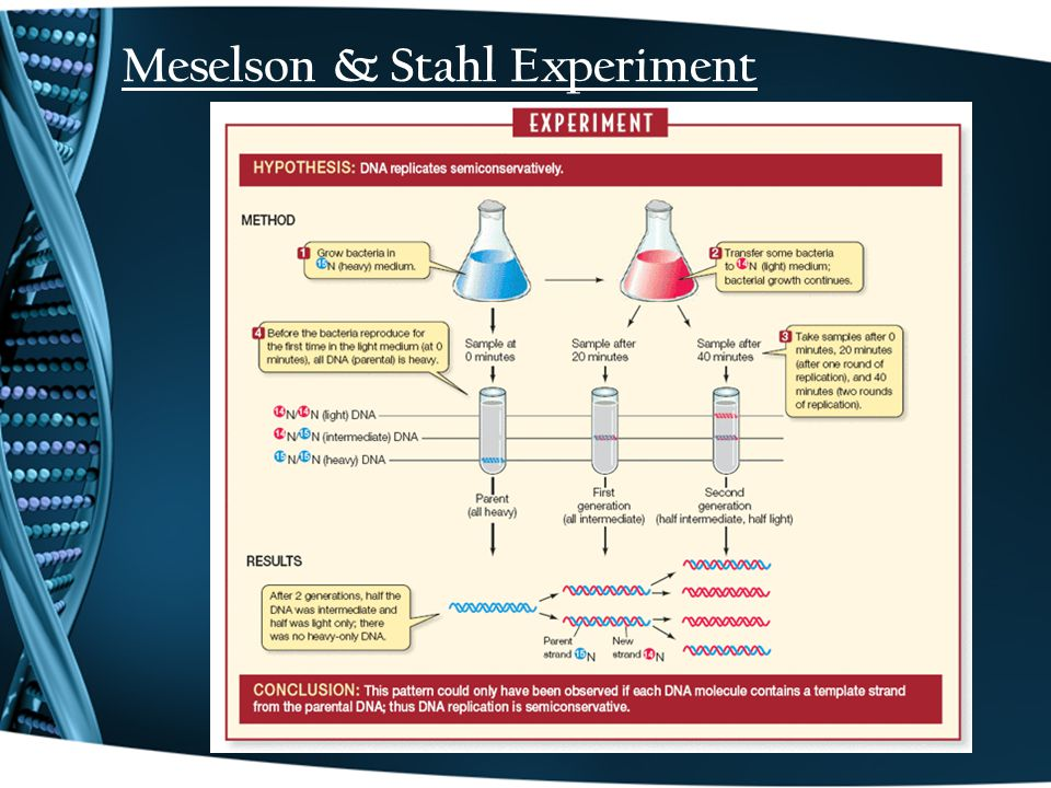 Meselson & Stahl Experiment