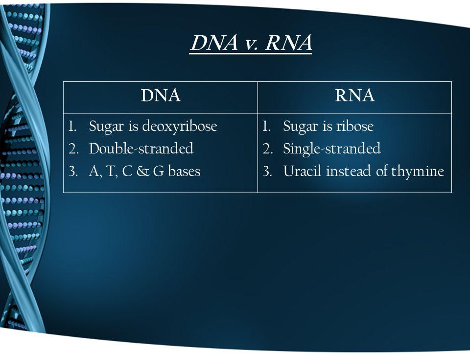 DNA v.