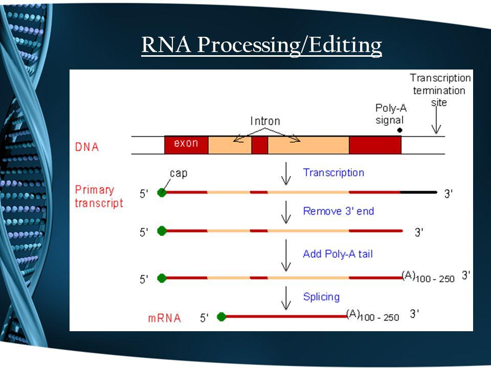 RNA Processing/Editing