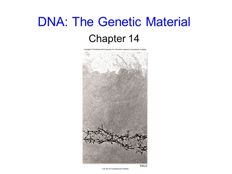 42 DNA Replication Meselson and Stahl concluded that the mechanism of DNA replication is the semiconservative model.