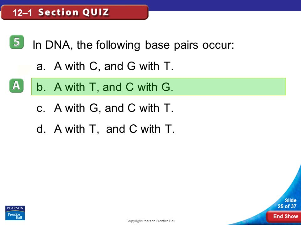 End Show Slide 25 of 37 Copyright Pearson Prentice Hall 12–1 In DNA, the following base pairs occur: a.A with C, and G with T.