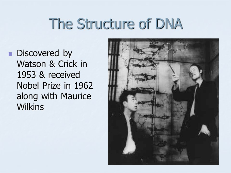 The Structure of DNA Discovered by Watson & Crick in 1953 & received Nobel Prize in 1962 along with Maurice Wilkins Discovered by Watson & Crick in 1953 & received Nobel Prize in 1962 along with Maurice Wilkins