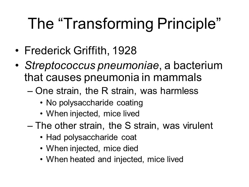 The Transforming Principle Frederick Griffith, 1928 Streptococcus pneumoniae, a bacterium that causes pneumonia in mammals –One strain, the R strain, was harmless No polysaccharide coating When injected, mice lived –The other strain, the S strain, was virulent Had polysaccharide coat When injected, mice died When heated and injected, mice lived