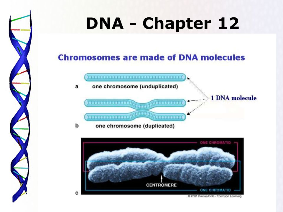 1 DNA - Chapter 12