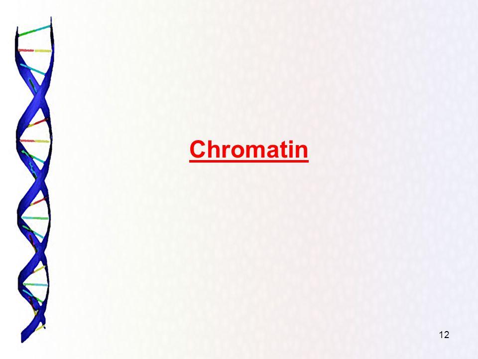 12 Chromatin