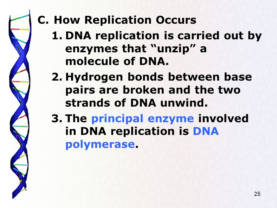 25 C.How Replication Occurs 1.DNA replication is carried out by enzymes that unzip a molecule of DNA.