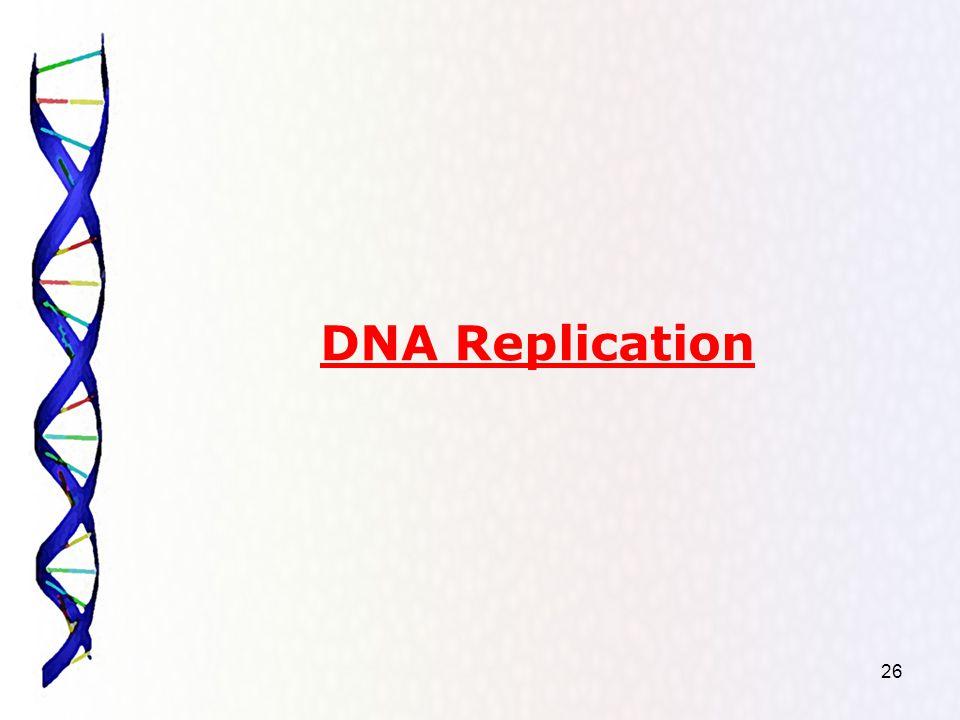 26 DNA Replication