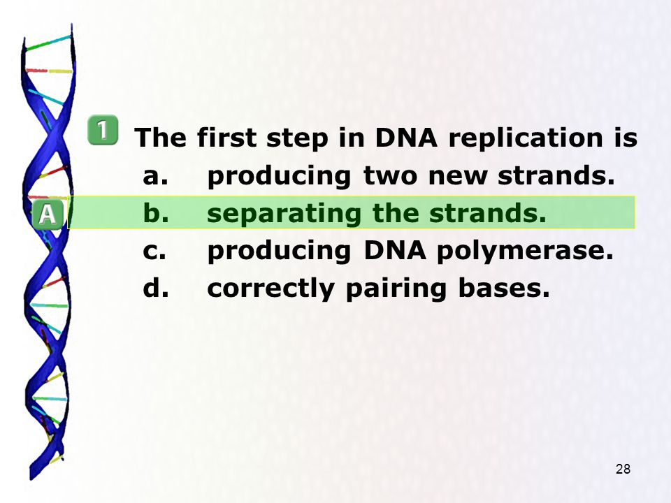 28 The first step in DNA replication is a.producing two new strands.