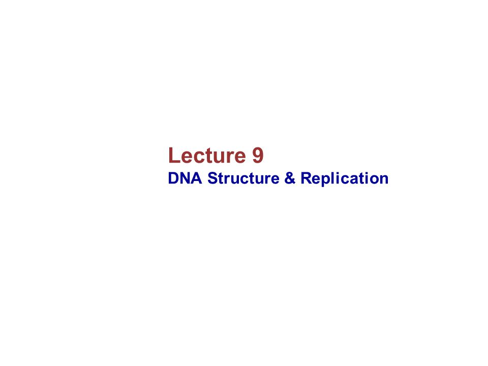 Lecture 9 DNA Structure & Replication