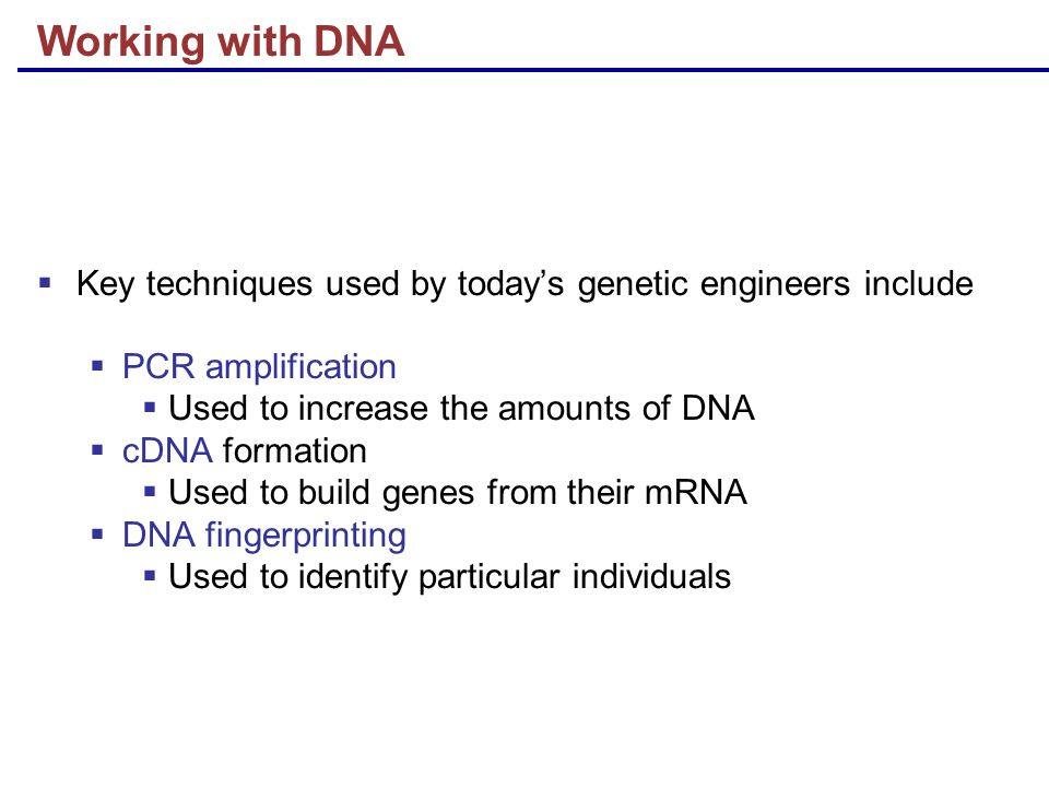Working with DNA  Key techniques used by today's genetic engineers include  PCR amplification  Used to increase the amounts of DNA  cDNA formation  Used to build genes from their mRNA  DNA fingerprinting  Used to identify particular individuals