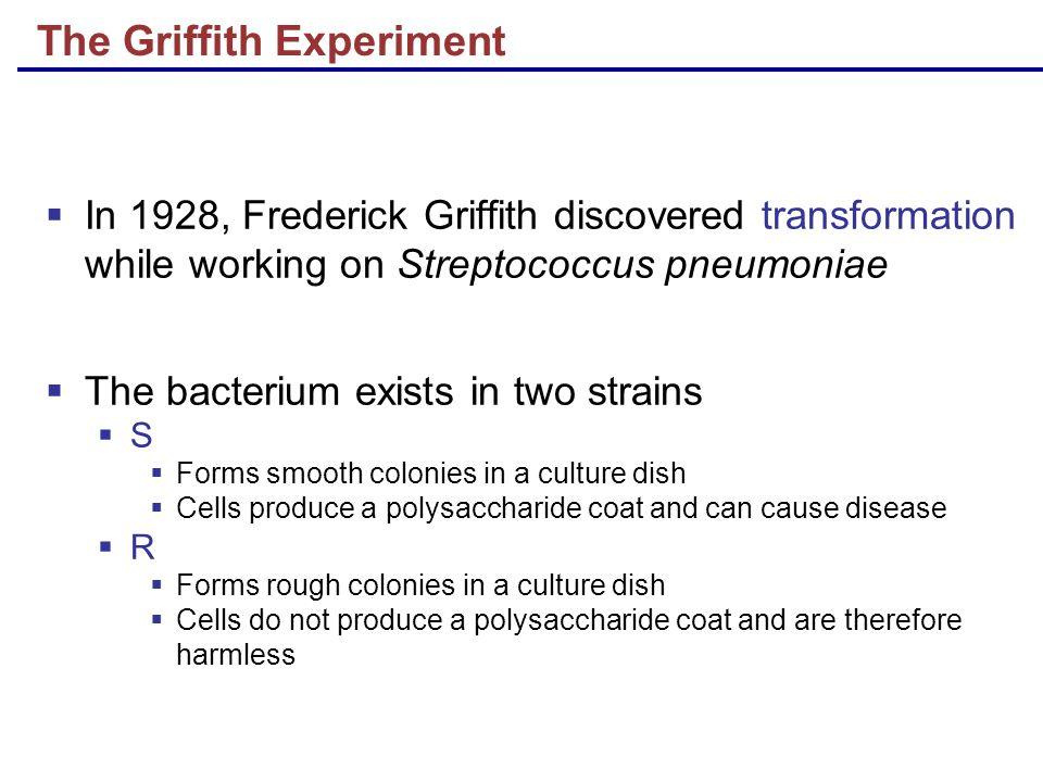The Griffith Experiment  In 1928, Frederick Griffith discovered transformation while working on Streptococcus pneumoniae  The bacterium exists in two strains  S  Forms smooth colonies in a culture dish  Cells produce a polysaccharide coat and can cause disease  R  Forms rough colonies in a culture dish  Cells do not produce a polysaccharide coat and are therefore harmless