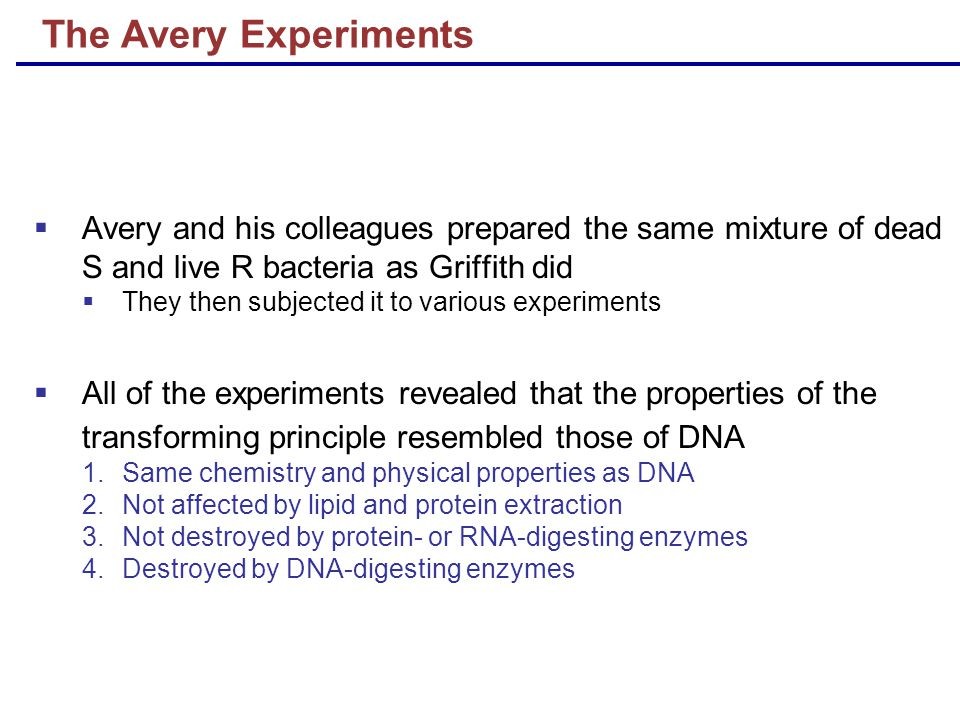  Avery and his colleagues prepared the same mixture of dead S and live R bacteria as Griffith did  They then subjected it to various experiments  All of the experiments revealed that the properties of the transforming principle resembled those of DNA 1.Same chemistry and physical properties as DNA 2.Not affected by lipid and protein extraction 3.Not destroyed by protein- or RNA-digesting enzymes 4.Destroyed by DNA-digesting enzymes The Avery Experiments