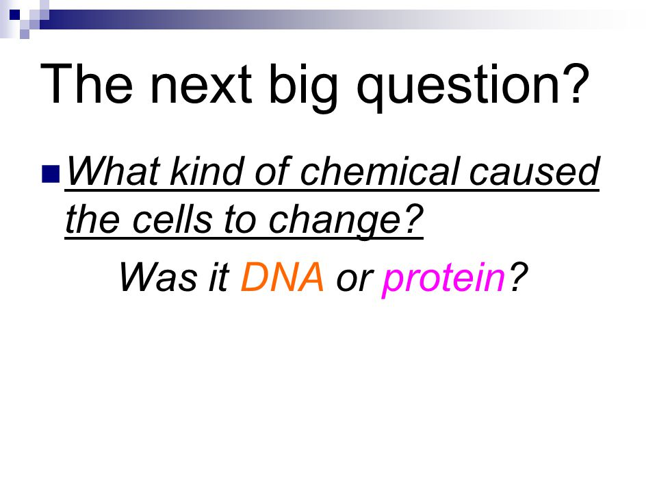 The next big question? What kind of chemical caused the cells to change? Was it DNA or protein?