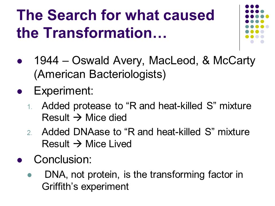 The Search for what caused the Transformation… 1944 – Oswald Avery, MacLeod, & McCarty (American Bacteriologists) Experiment: 1.