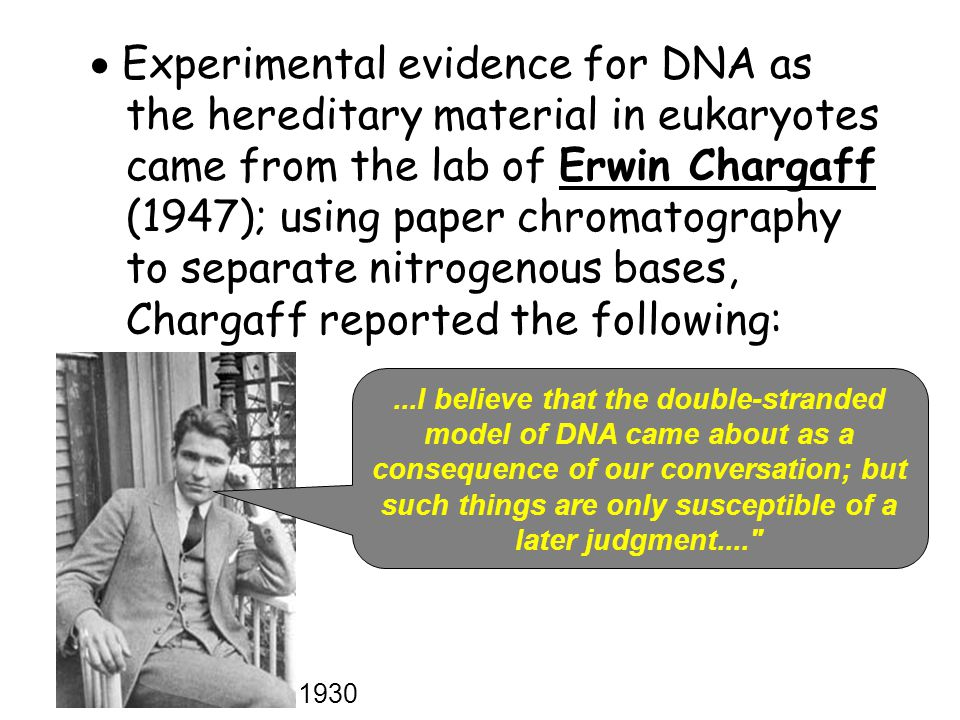  Experimental evidence for DNA as the hereditary material in eukaryotes came from the lab of Erwin Chargaff (1947); using paper chromatography to separate nitrogenous bases, Chargaff reported the following: 1930...I believe that the double-stranded model of DNA came about as a consequence of our conversation; but such things are only susceptible of a later judgment....