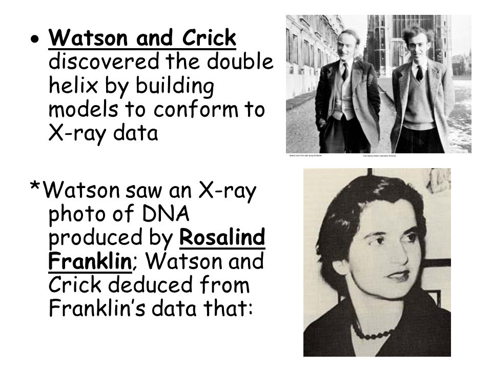  Watson and Crick discovered the double helix by building models to conform to X-ray data *Watson saw an X-ray photo of DNA produced by Rosalind Franklin; Watson and Crick deduced from Franklin's data that: