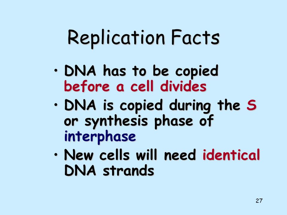 26 DNA Replication
