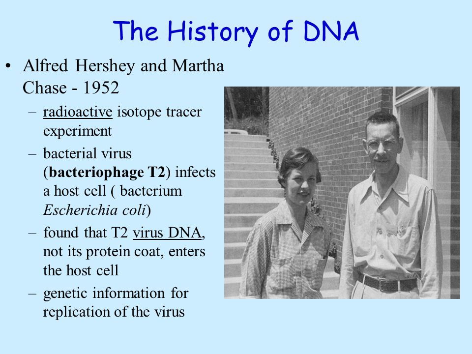 Oswald Avery Avery continued working with Griffith's findings in hope of discovering what factor in bacteria carried the trait of virulence.