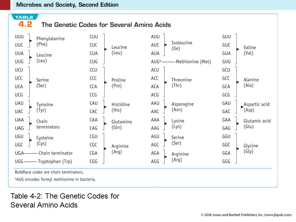 Table 4-2: The Genetic Codes for Several Amino Acids