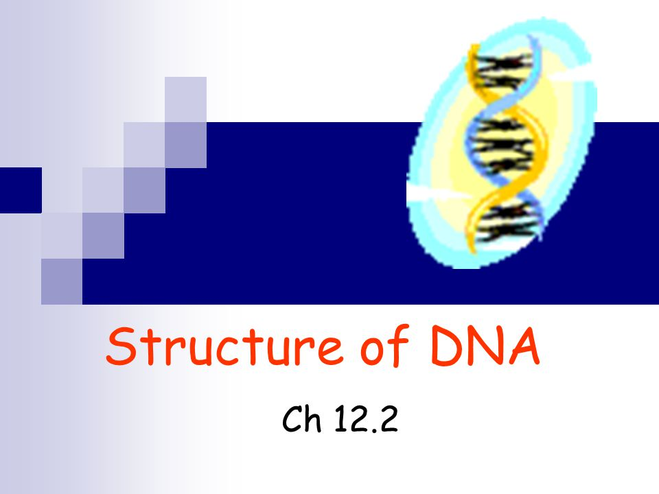 Structure of DNA Ch 12.2
