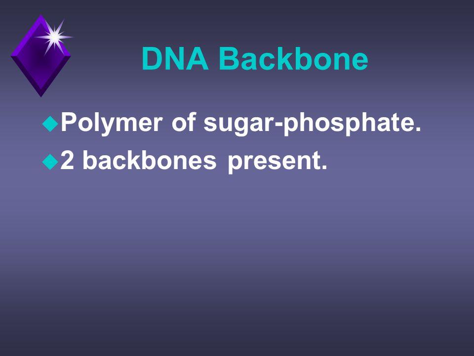 DNA Backbone u Polymer of sugar-phosphate. u 2 backbones present.