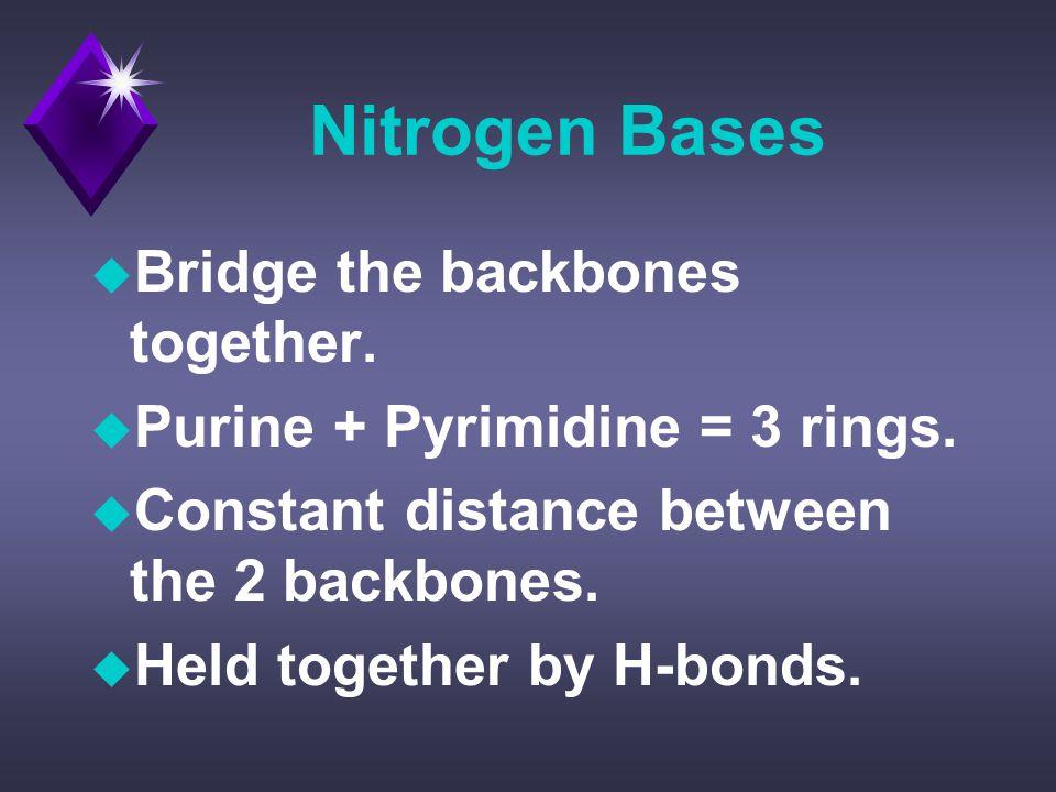 Nitrogen Bases u Bridge the backbones together. u Purine + Pyrimidine = 3 rings.
